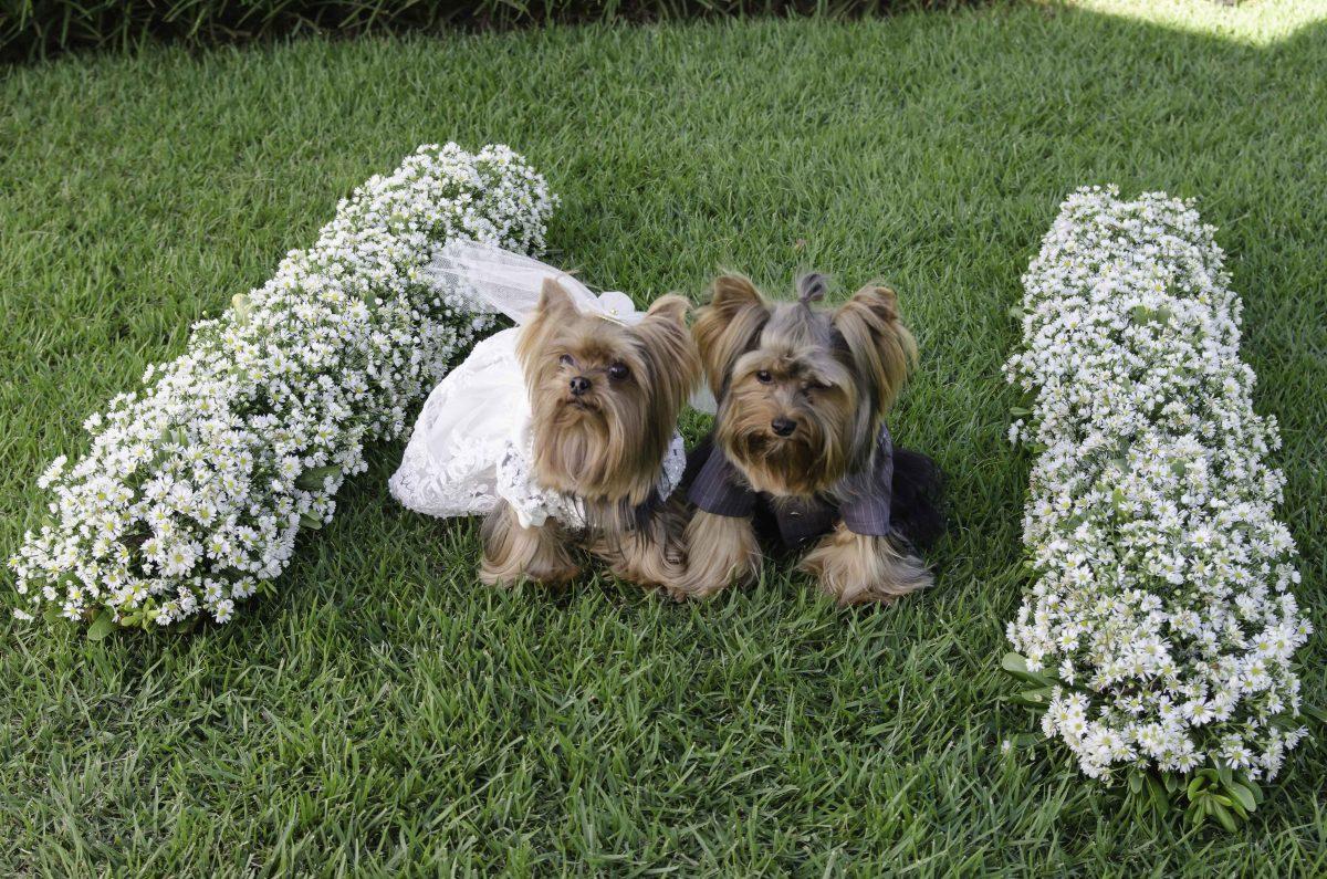 roupinhas-cachorro-casamento-vestido-noi